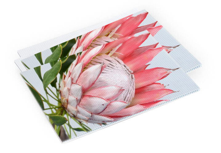 A protea image in a corflute sign